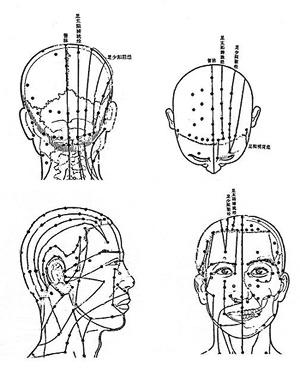 頭部經絡穴位分佈