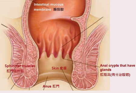 raw skin on anus